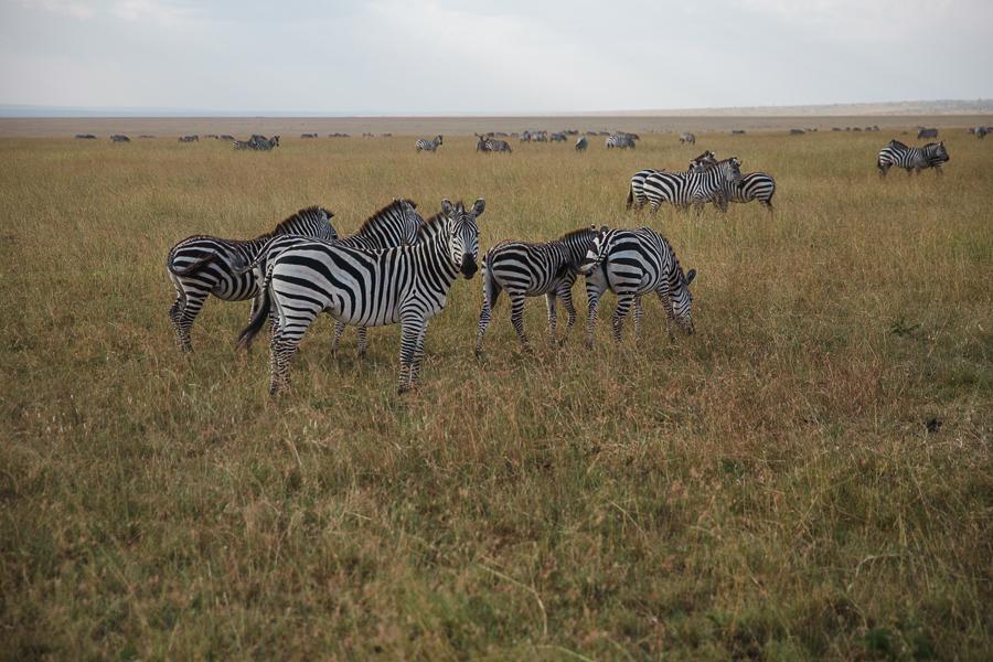 safaridayoneblog-113