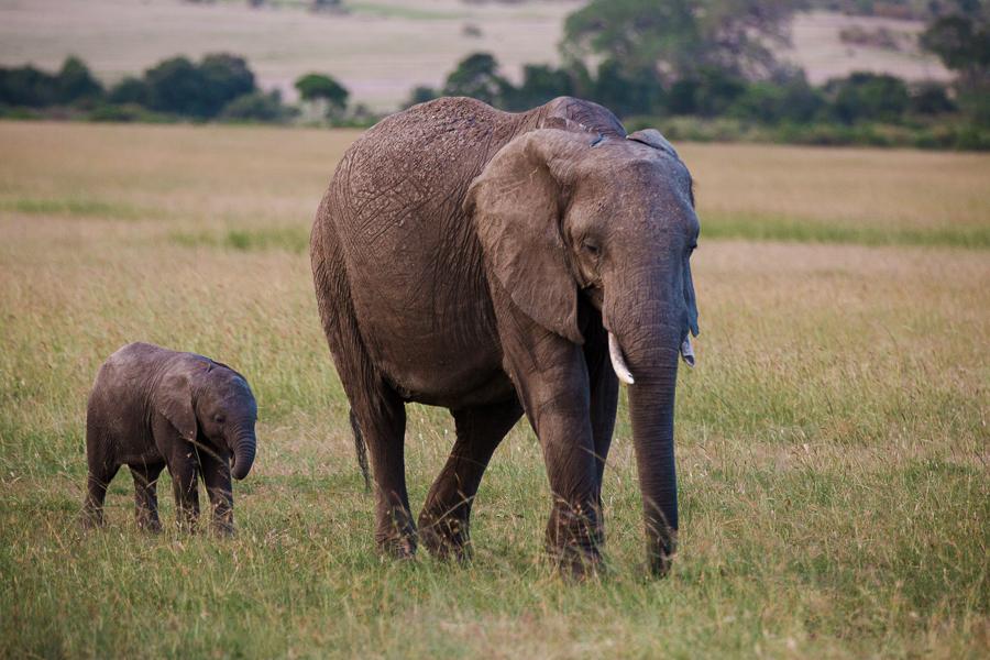 safaridayoneblog-122