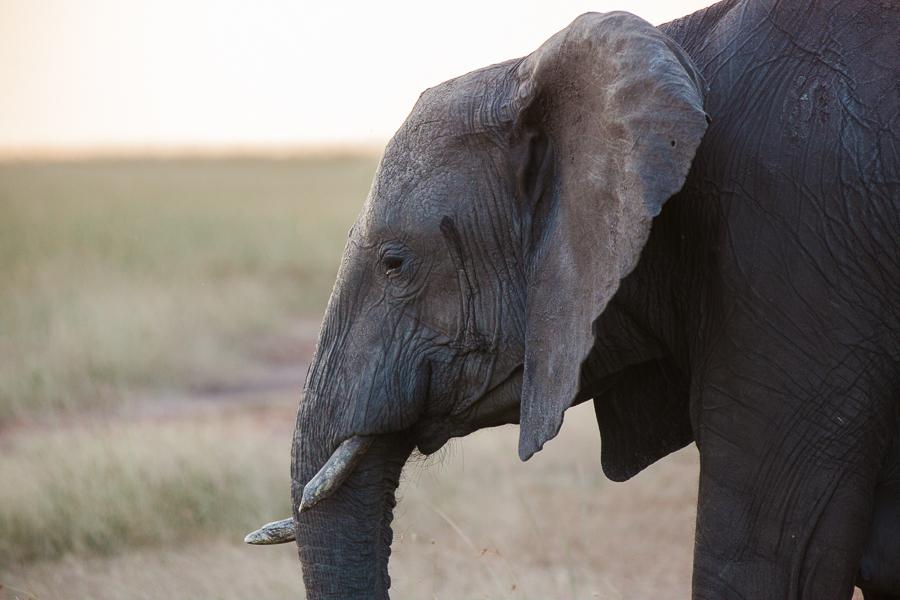 safaridayoneblog-127