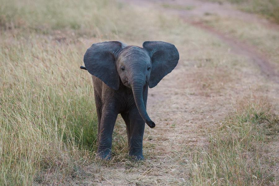 safaridayoneblog-128
