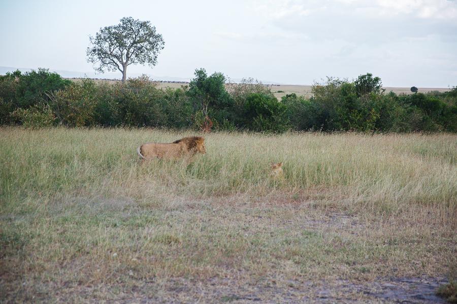 safaridayoneblog-129