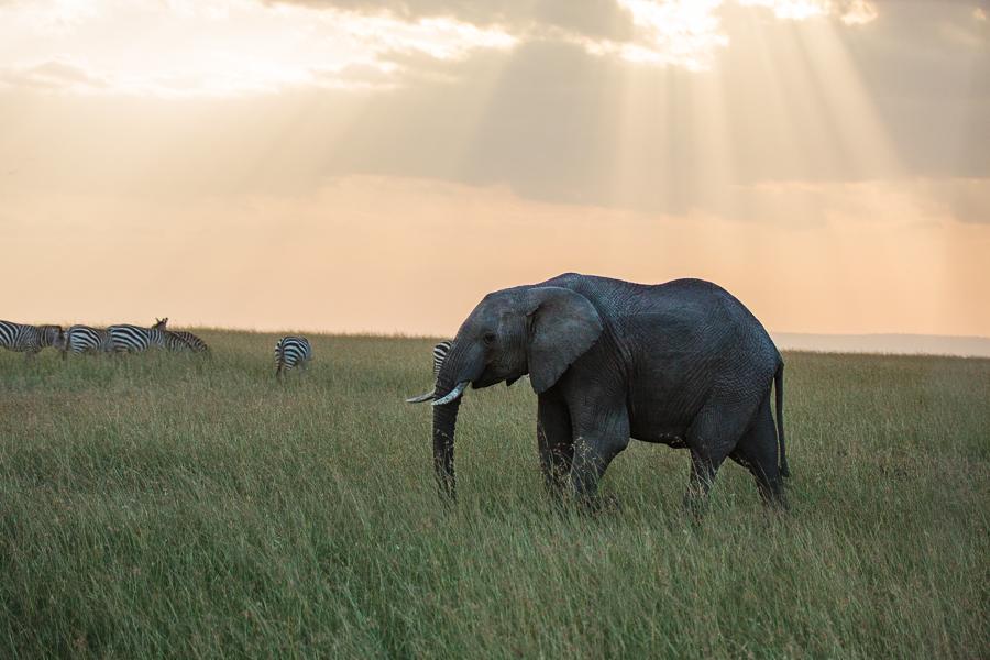safaridayoneblog-141