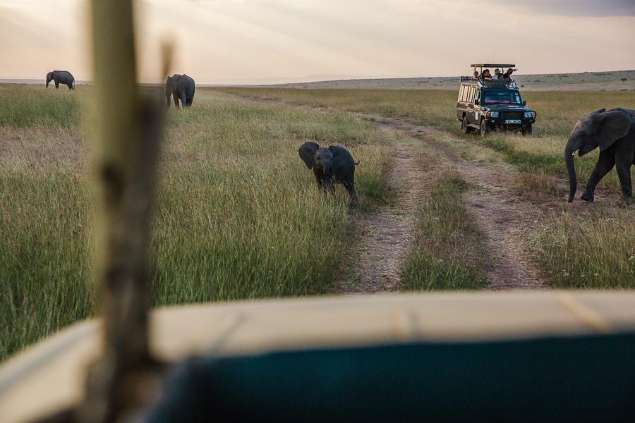 safaridayoneblog-149