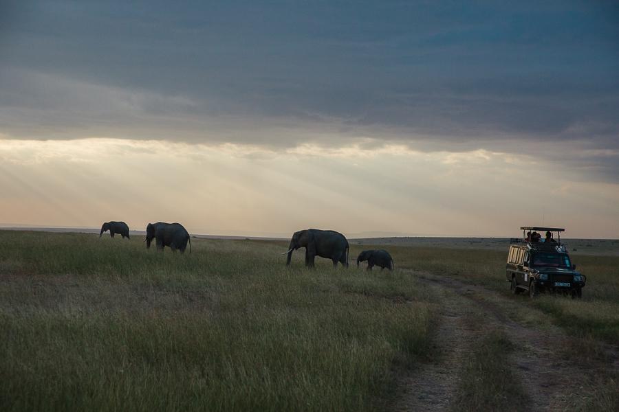 safaridayoneblog-151