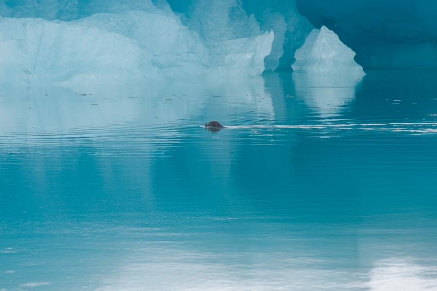 glacierlagoonBLOG-112