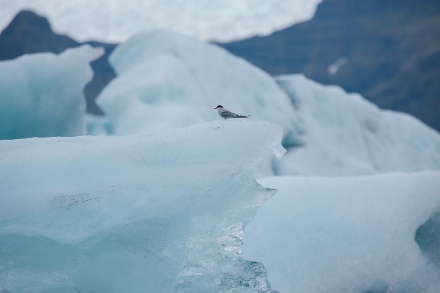 glacierlagoonBLOG-137
